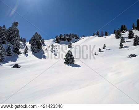 Snow-covered Trees In A Beautiful Winter Landscape In The Mountains Above Davsos Klosters At The Flu