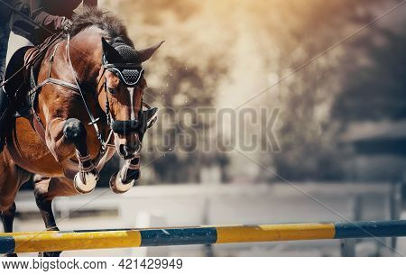 The Bay Horse Overcomes An Obstacle. Equestrian Sport, Jumping. Overcome Obstacles. Dressage Of Hors