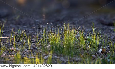 Close up shot of fresh grass with back lit.