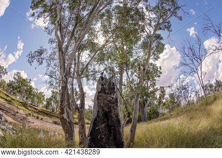 A Rotting Tree Trunk On The Banks Of A Country Creek, Landscape Curved With Fish Eye Lens
