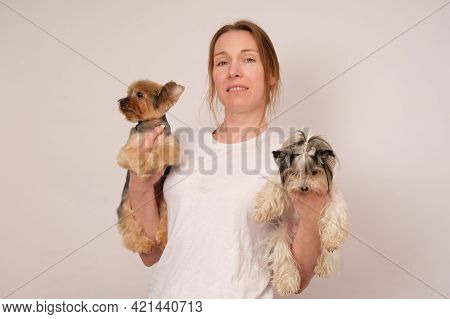 A Girl With A Yorkshire Terrier On One Hand And A Beaver Terrier On The Other.