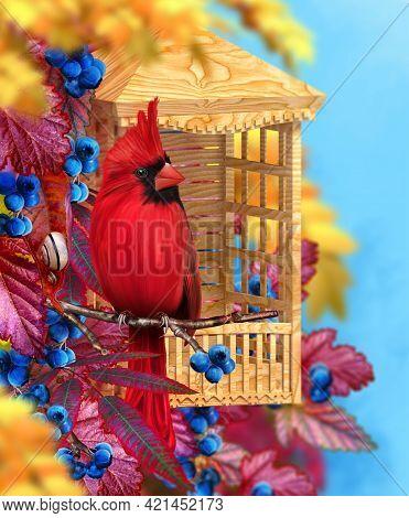 Autumn Bright Background, Bird Red Cardinal Sits On A Tree Branch, Yellow, Orange Falling Foliage, B