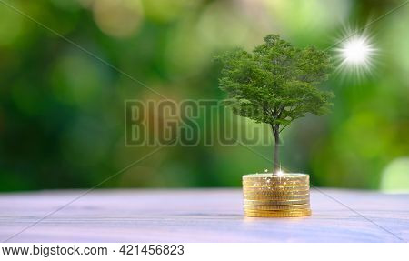 Plant Growing In Savings Coins And Business Growth Concept, Finance And Investment Concept, Advertis