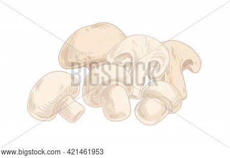 Champignon Composition With Whole Mushrooms And Cut Pieces Of Fungus. Slices Of Fresh Edible Fungi.