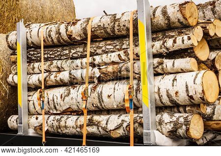 Timber Logging. Freshly Cut Birch Tree Wooden Logs On Truck. Timber Harvesting And Transportation In