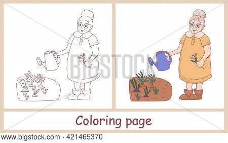 Cute Female Character. Grandmother With A Watering Can Watering A Flower In The Vegetable Garden. Li