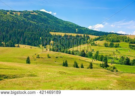 Rural Fields In Mountainous Countryside. Trees On The Grassy Hills. Summer Landscape On A Bright Sun