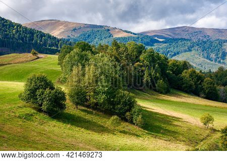 Trees On The Grassy Hill. Sunny Countryside Scenery In Early Autumn. Beautiful Landscape Of Carpathi