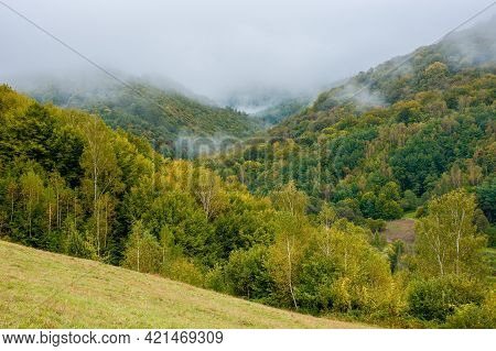 Fog Rising Above The Forest. Moody Nature Background With Cloudy Sky. Cold Mist In The Valley Of Car
