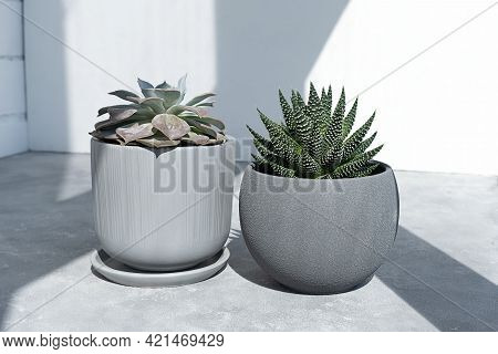 Home Plants Succulents Echeveria And Haworthia In Designer Modern Pots In The Sun Against On A Gray