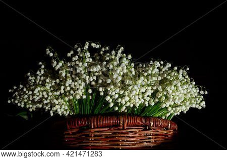 Postcard With Copy Space. Banner With Large Beautiful Bouquet Of White May-lily Or Lilies Of The Val