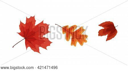 Colorful Vivid Autumn Falling Leaves. Vector Illustration