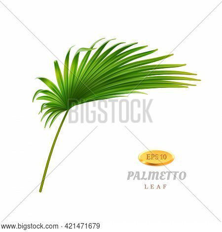 Tropical Vegetation And Exotic Leafage, Isolated Bend Or Curved Palmetto Leaf. Flora Of Warm Rainfor