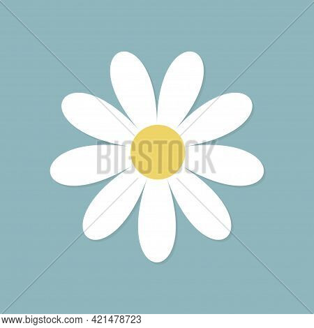 White Daisy Chamomile Flower Round Icon. Cute Plant Collection. Camomile Petal. Love Card. Growing C
