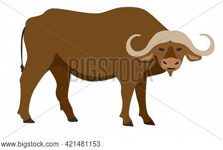 Buffalo Icon. Vector Illustration Of African Buffalo, Standing, In Flat Style. Isolated On White. Is