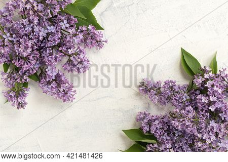 Background With Spring Blossom. Spring Or Summer Concept. Flat Lay Blooming Lilac Bush With Tender T