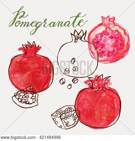 Pomegranate Vector Illustration In A Modern Loose Watercolor And Ink Line Art Style. Hand-painted An