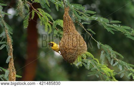 Bird Sited On Tree , Bird On Nest , Birds Photography