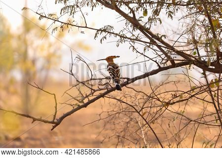 Bird Sited On Tree    Birds Photography , Bird Photo