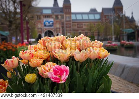 Colorful Flowers In Stone Flowerpot In The Museum Area, Amsterdam, Netherlands