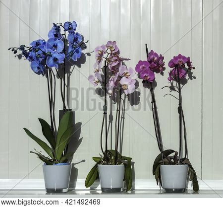 Multicolored Orchid Flowers In Pots Close Up