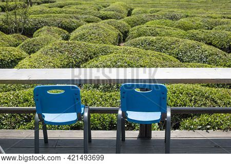 The Beautiful Landscape Of Green Tea Farm In Korea.