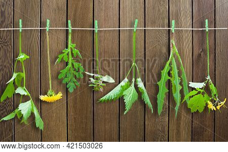 Fresh Herbs Hanging From Rope. Collection Of Herbs.