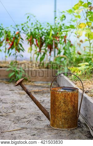 Old, Rusty Watering Can Standing Inside Greenhouse