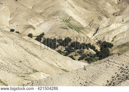 View Of An Oasis In A Valley Between The Sandy Mountains Of The Judean Desert