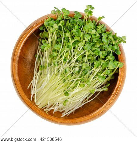 Rapeseed Microgreens, In A Wooden Bowl. Ready To Eat, Green Canola Sprouts, Seedlings, Shoots And Yo