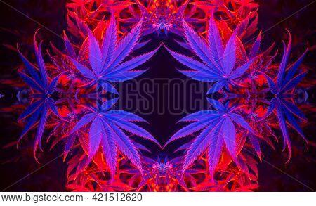 Cannabis Frame Foliage. Beautiful Fashionable Background With Hemp Leaves. Aesthetic Look On Medicin