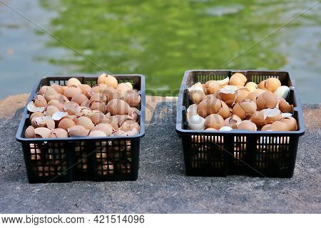 Eggshells In Two Baskets Put It In The Sunlight To Dry And The Benefits Of Eggshell Can Be Used As A