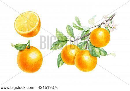 Realistic Watercolor Set Of Orange Branch, Half Orange And Whole Orange Isolated On White Background
