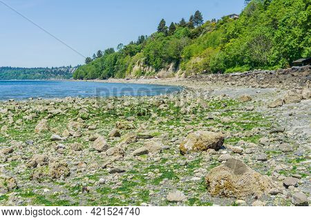 An Extreme Low Tide Reveals Rocks On The Shoreline At Saltwater State Park In Des Moines, Washington