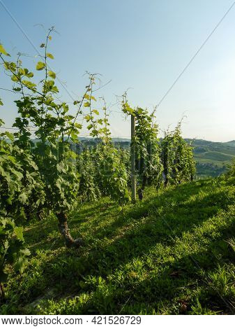 View On The Western Langhe Near Neive, Piedmont - Italy
