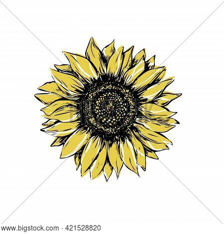 Sunflower Vector Illustration In Sketch Style. Black And Yellow Outline On A White Background. Hand