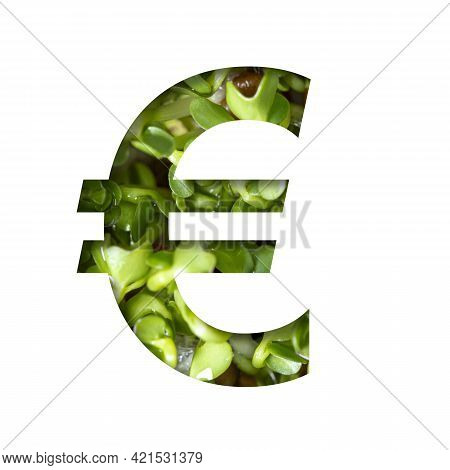 Font On Micro Greenery. Euro Money Business Symbol  Out Of Paper On The Background Of Sprouts Of Fre
