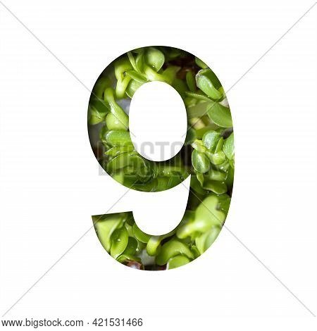 Font On Micro Greenery.the Digit Nine, 9 Cut Out Of Paper On The Background Of Sprouts Of Fresh Brig
