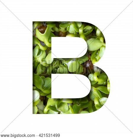 Font On Micro Greenery.the Letter B Cut Out Of Paper On The Background Of Sprouts Of Fresh Bright Mi