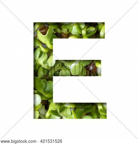 Font On Micro Greenery.the Letter E Cut Out Of Paper On The Background Of Sprouts Of Fresh Bright Mi