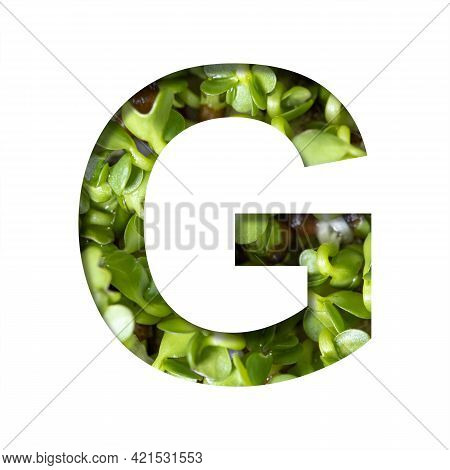 Font On Micro Greenery.the Letter G Cut Out Of Paper On The Background Of Sprouts Of Fresh Bright Mi