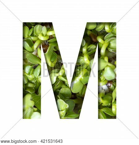 Font On Micro Greenery.the Letter M Cut Out Of Paper On The Background Of Sprouts Of Fresh Bright Mi