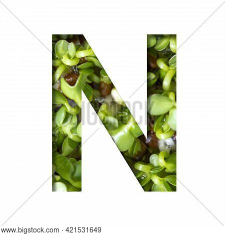 Font On Micro Greenery.the Letter N Cut Out Of Paper On The Background Of Sprouts Of Fresh Bright Mi