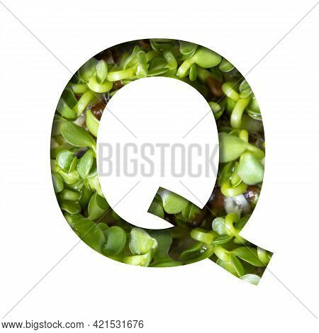 Font On Micro Greenery.the Letter Q Cut Out Of Paper On The Background Of Sprouts Of Fresh Bright Mi