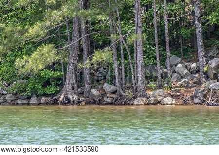 Exposed Roots On The Conifers From Erosion Hanging On The Edge Surrounded By Boulders And Rocks At T