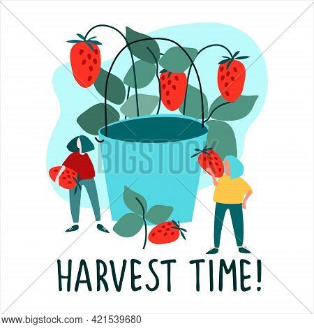 Women Picking Strawberries Vector Illustration In Flat Style. Harvest Time Quote. Harvesting, Agrito