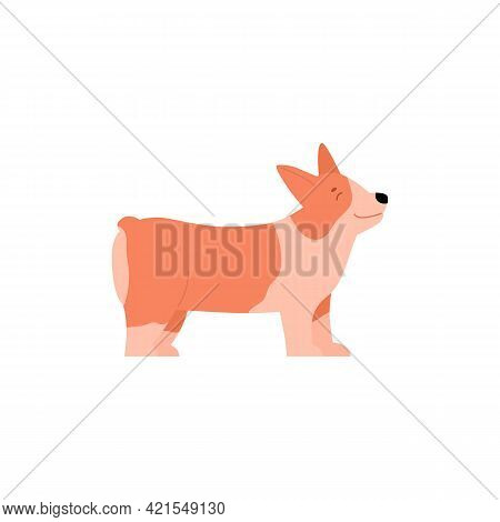 Welsh Corgi Pembroke Dog Cartoon Character, Flat Vector Illustration Isolated.