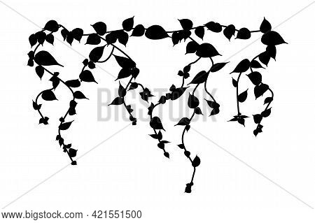 Ivy Vine Silhouette Isolated On White Background. Vine Plant. Black Hanging Vine With Leaves. Spring