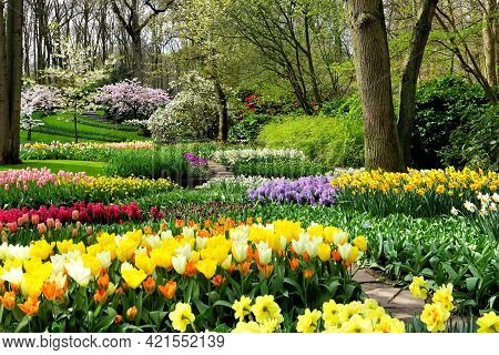 Colorful Spring Flowers In The Beautiful Landscaped Gardens Of Keukenhof, Netherlands