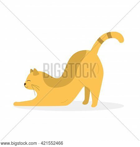 Cute Yellow Stretching Hiding Cat. Vector Illustration